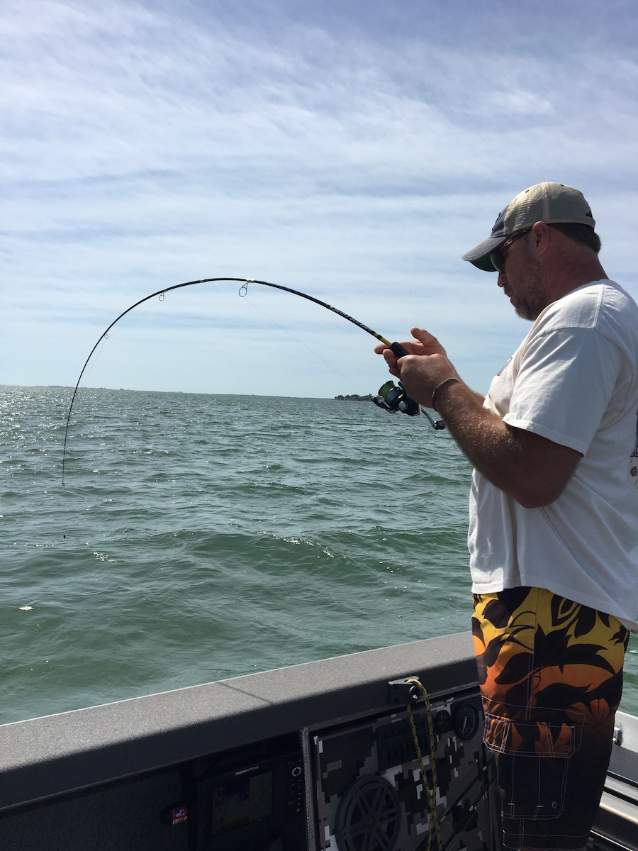 Tampa bay 39 s march fishing report hotshot guide services for Tampa bay fishing guides